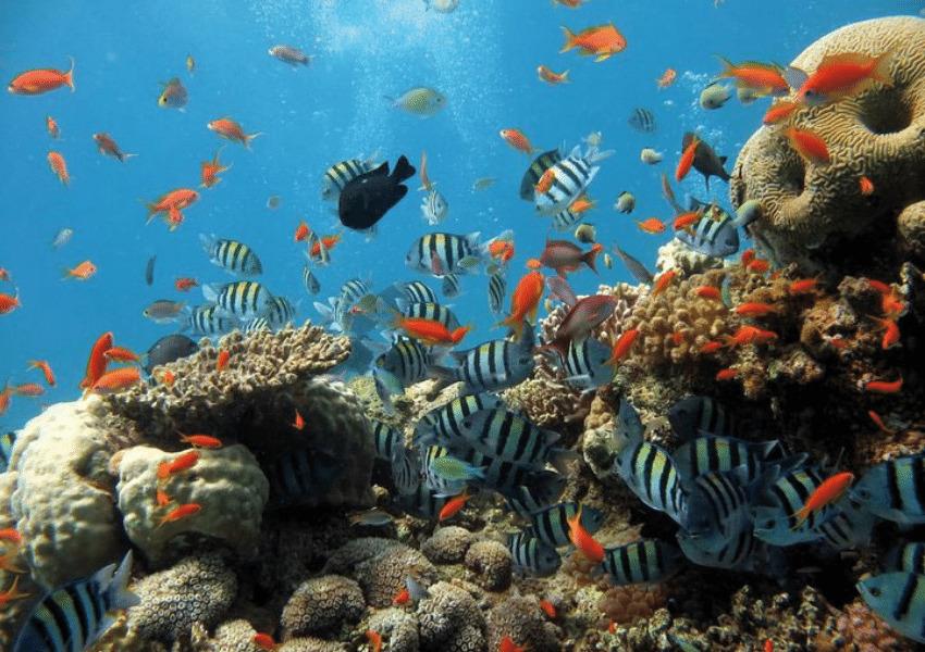 dingle family aquarium